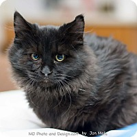 Adopt A Pet :: Nefertari - Fountain Hills, AZ