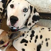 Adopt A Pet :: Emily - Newcastle, OK