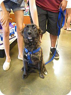 Boxer/Eskimo Dog Mix Dog for adoption in Macon, Georgia - Bailee