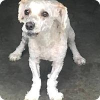 Adopt A Pet :: Stuart - Bloomfield, CT