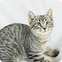 Adopt A Pet :: Brandon - Fountain Hills, AZ