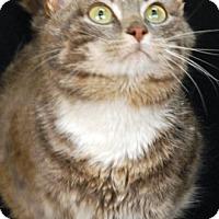 Adopt A Pet :: Steel - Newland, NC