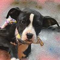 Adopt A Pet :: Monica - Jefferson, GA