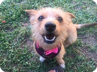 Terrier (Unknown Type, Small)/Dachshund Mix Dog for adoption in Austin, Texas - Ellie