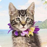Adopt A Pet :: Vann - Harrisonburg, VA