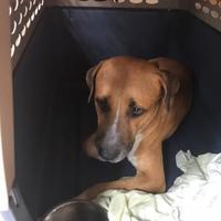 Adopt A Pet :: COMMIT - St. Thomas, VI
