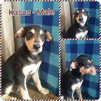 Labrador Retriever Mix Puppy for adoption in East Hartford, Connecticut - Kasus pending adoption