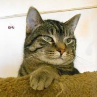 Adopt A Pet :: Eric - Oskaloosa, IA