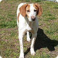 Adopt A Pet :: Rufus - Ashland, VA