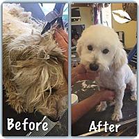 Adopt A Pet :: Maestro - Sun Valley, CA