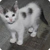 Adopt A Pet :: T17 Lizzie ADOPTED - Northville, MI