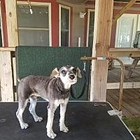 Adopt A Pet :: Donovan Roscoe - Madison, WI