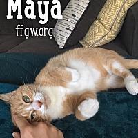 Adopt A Pet :: Maya - Merrifield, VA