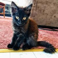 Adopt A Pet :: Sundance - Santa Cruz, CA