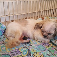 Adopt A Pet :: Raven - Schofield, WI
