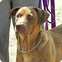 Adopt A Pet :: Bailey - Clinton, ME