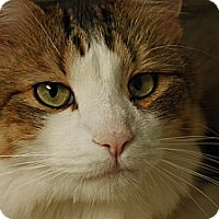 Adopt A Pet :: Feenix - Lombard, IL