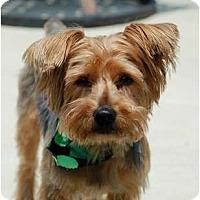 Adopt A Pet :: Lipton - Charlotte, NC