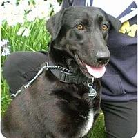Adopt A Pet :: ESTELLA - San Diego, CA