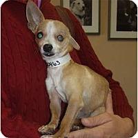 Adopt A Pet :: Parker - Chimayo, NM