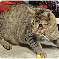 Adopt A Pet :: Colby - Milford, MA