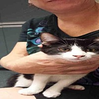Adopt A Pet :: MISHA - Gainesville, FL