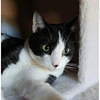 Adopt A Pet :: Oreo - Scottsboro, AL