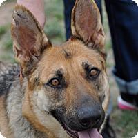 Adopt A Pet :: Bonnie - Dripping Springs, TX