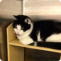 Adopt A Pet :: Cookie - Colmar, PA