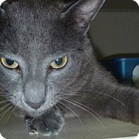 Adopt A Pet :: Toonsis - Hamburg, NY