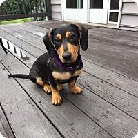 Adopt A Pet :: Birdie - Potomac, MD
