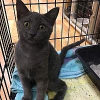 Adopt A Pet :: Cricket - Valencia, CA