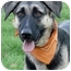 Photo 2 - German Shepherd Dog/Anatolian Shepherd Mix Dog for adoption in Sacramento, California - Bella superrrr