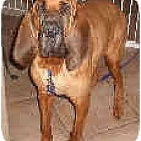Adopt A Pet :: Elmo - Phoenix, AZ