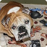 Adopt A Pet :: Churchill - Winder, GA