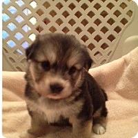 Adopt A Pet :: Maddie - Palmyra, WI
