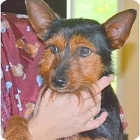 Adopt A Pet :: Terry - Greensboro, NC