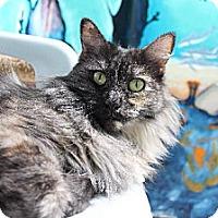 Adopt A Pet :: Charlie - Newport Beach, CA