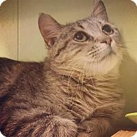 Adopt A Pet :: Wendy - Raleigh, NC