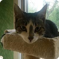 Adopt A Pet :: Wolfie - Southington, CT