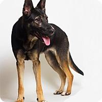 Adopt A Pet :: Bella - Baton Rouge, LA