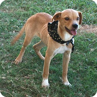 Labrador Retriever Mix Dog for adoption in Pilot Point, Texas - Fiona