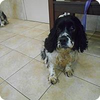 Adopt A Pet :: Myla -Adopted! - Kannapolis, NC