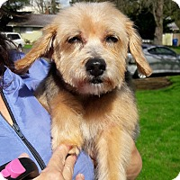 Adopt A Pet :: Hannah - Salem, OR