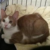 Adopt A Pet :: Liz - Medford, NJ