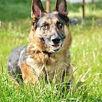 Adopt A Pet :: Ranger - Concord, CA