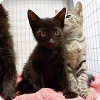 Adopt A Pet :: Mickey - Houston, TX