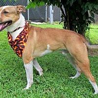 Adopt A Pet :: Oakley - Tyler, TX