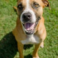 Adopt A Pet :: Mark - Greenwood, SC