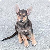 Adopt A Pet :: Hans - Portage, MI